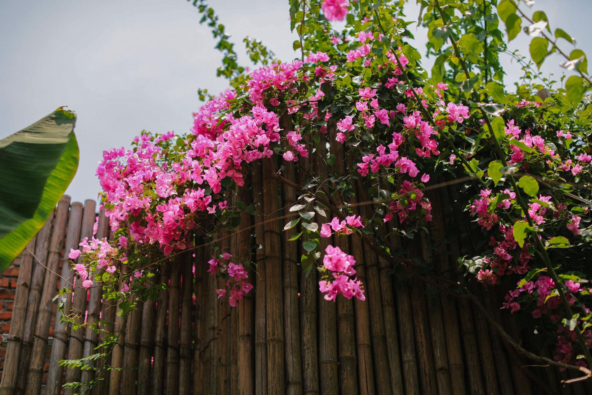 Mê mẩn với căn nhà second-home đẹp đến phát thèm tại ngoại ô Hà Nội, lộ bí quyết nhà đẹp quanh năm chỉ với 0 đồng của bà chủ nhà - Ảnh 20.