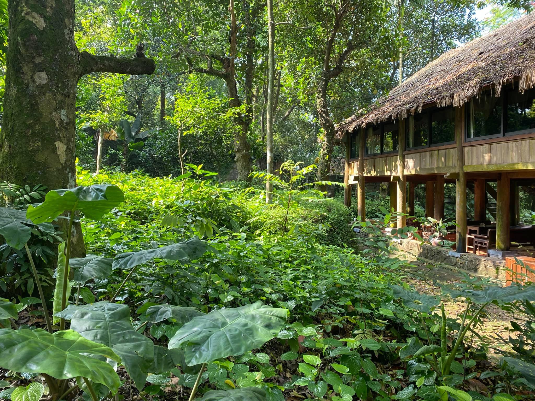 Mê mẩn với căn nhà second-home đẹp đến phát thèm tại ngoại ô Hà Nội, lộ bí quyết nhà đẹp quanh năm chỉ với 0 đồng của bà chủ nhà - Ảnh 22.