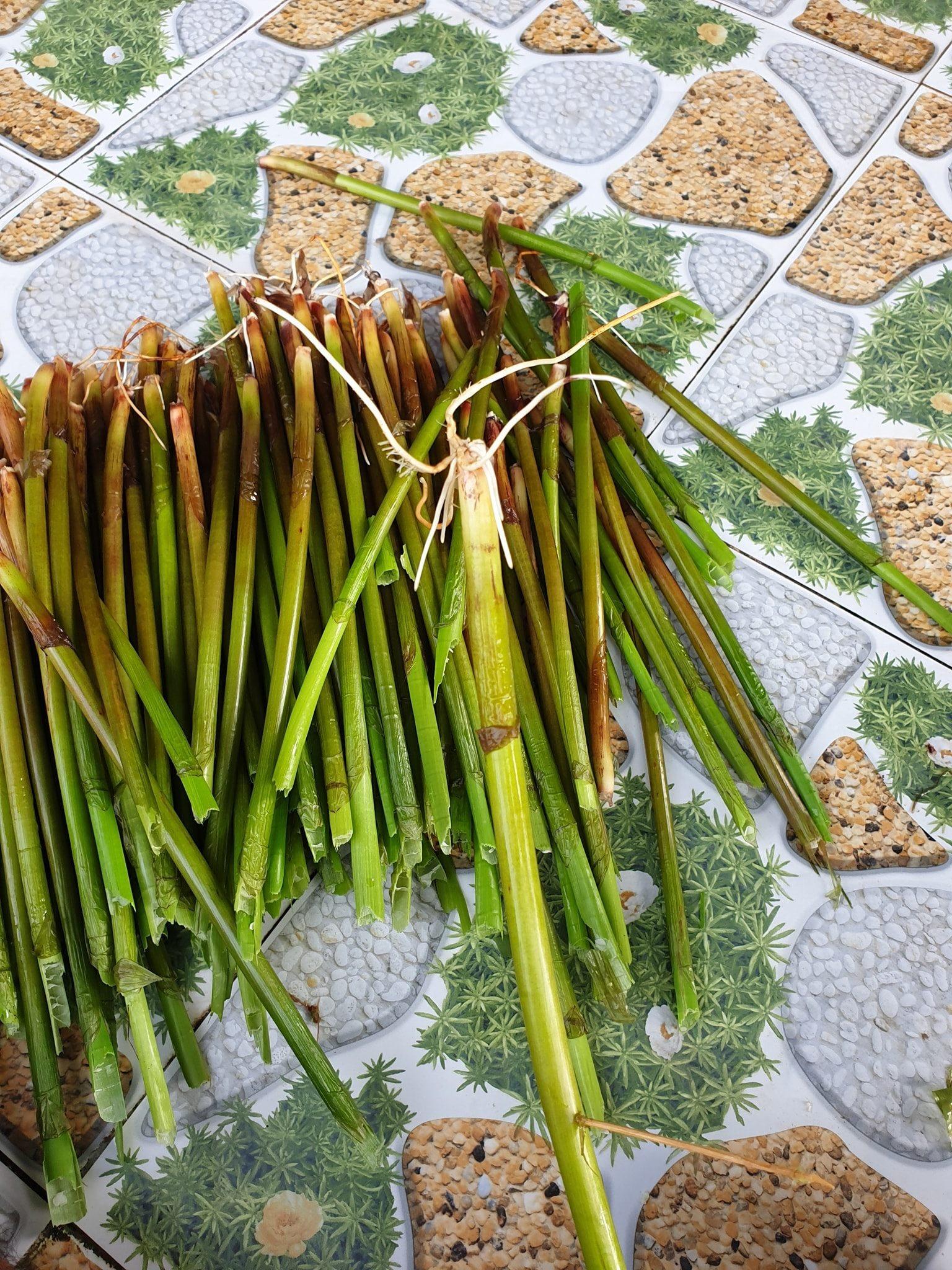Loại rau miền Tây xưa mọc không ai hái, giờ thành đặc sản nổi tiếng bán trên chợ mạng giá 120.000 đồng/kg - Ảnh 3.