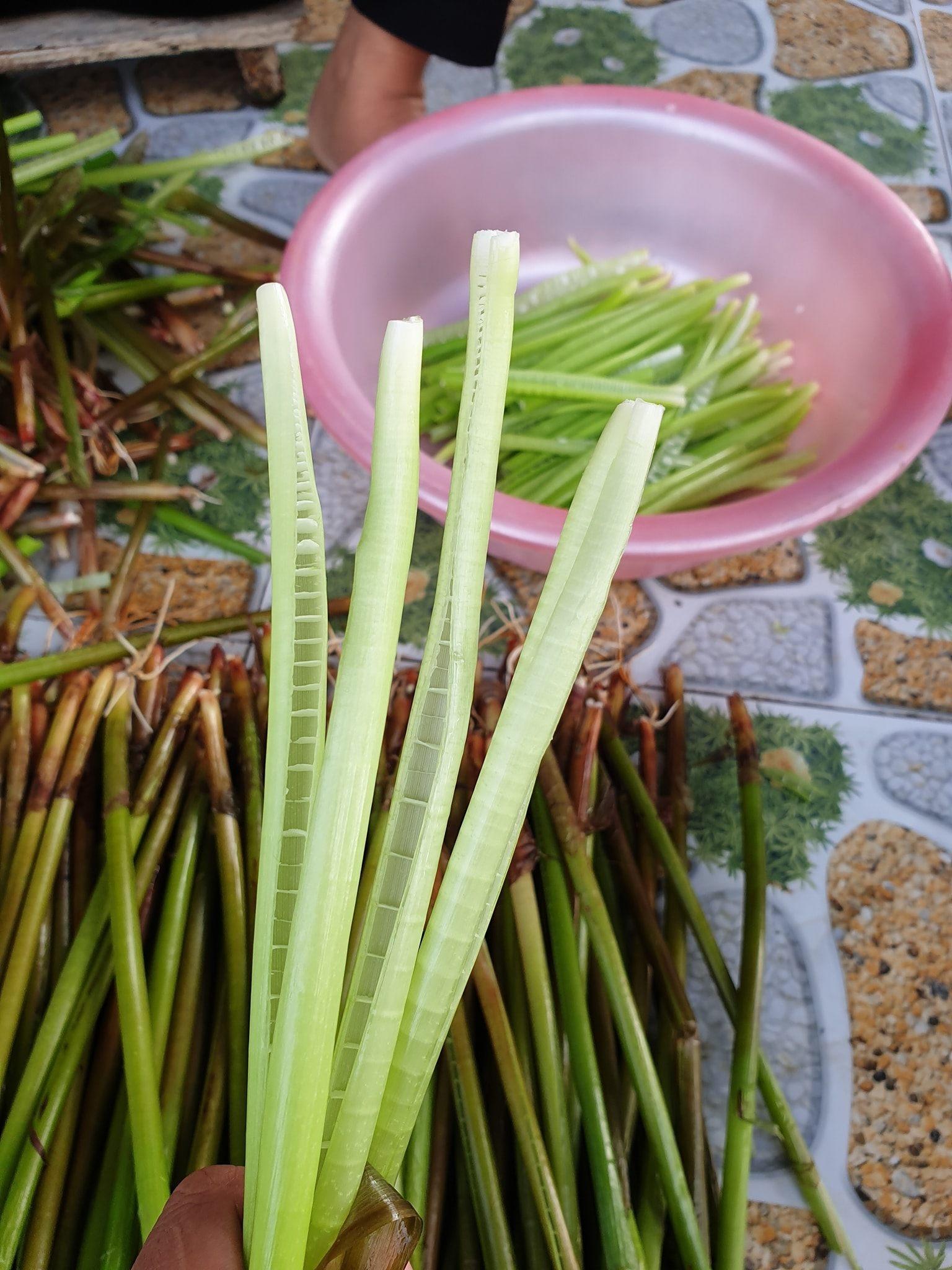 Loại rau miền Tây xưa mọc không ai hái, giờ thành đặc sản nổi tiếng bán trên chợ mạng giá 120.000 đồng/kg - Ảnh 4.