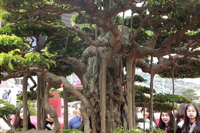 """Ông Phan Văn Toàn (TP Việt Trì, Phú Thọ), người sở hữu vườn cây di sản duy nhất ở Việt Nam cho biết: """"Tôi đã trả 7 tỷ đồng cho tác phẩm """"Thụ lâm bồng thạch"""" của anh Hùng nhưng anh ấy không bán, tôi muốn sở hữu tác phẩm này để trong vườn nhà mình cho bộ sưu tập cây thêm phong phú, đa dạng""""."""