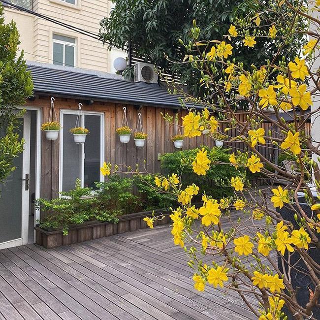 Trong dịp Tết này, Tăng Thanh Hà chia sẻ không gian riêng trong nhà khi tự tay trang trí cây hoa ngày Tết.