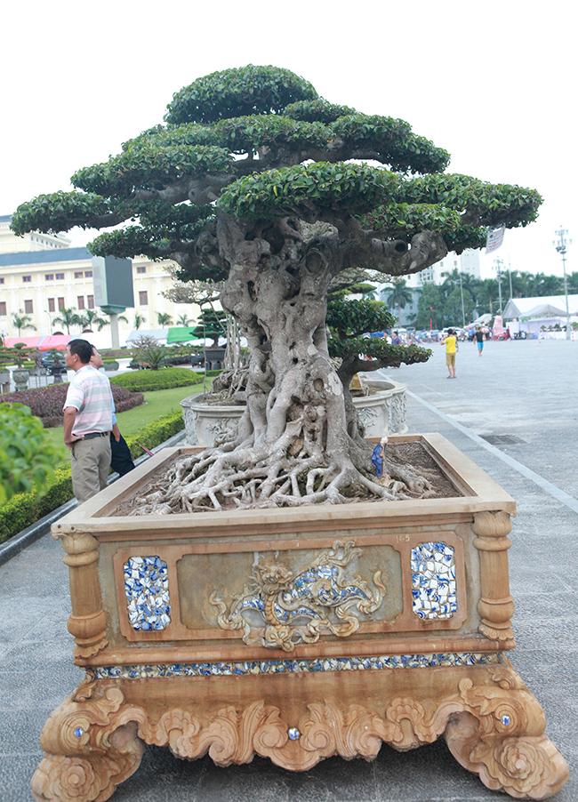 """Tác phẩm đã được đem đi một số triển lãm, đến triển lãm nào đều thu hút giới chơi cây """"thèm thuồng"""" bởi đây là một """"báu vật"""" hiếm có trong làng cây cảnh ở Việt Nam."""