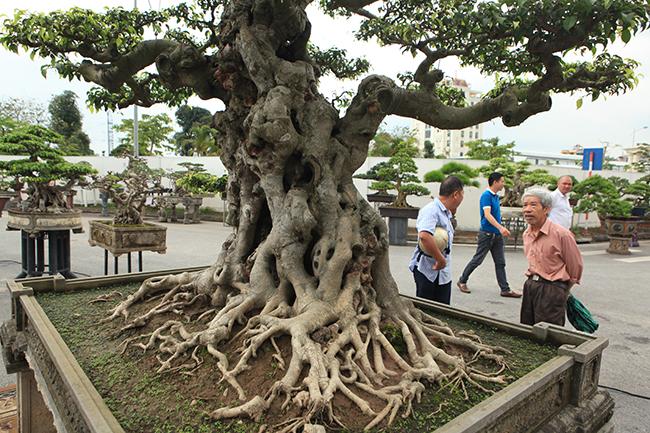 Giá trị nhất của Tiên lão giáng trần nằm ở phần thân kỳ, quái của cây. Những khối, cục mốc trắng càng làm tăng thêm độ đẹp của cây mà không có công nghệ nào có thể làm ra được, chỉ có cây tuổi đời lâu năm mới có.