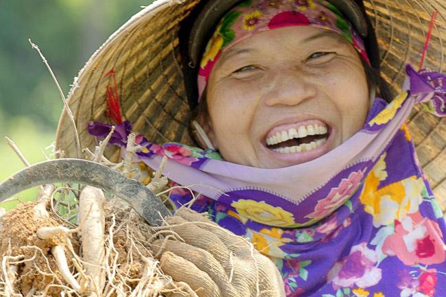 Cũng theo ông Phúc, loài sâm Bố chính trồng khá đơn giản và quỹ thời gian ươm, trồng và thu hoạch chỉ trong vòng 1 năm trời.