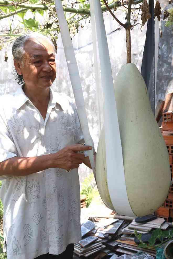 Lạ lùng những trái bầu siêu to, khổng lồ nặng từ 15-30 kg - 1