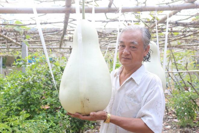 Lạ lùng những trái bầu siêu to, khổng lồ nặng từ 15-30 kg - 2