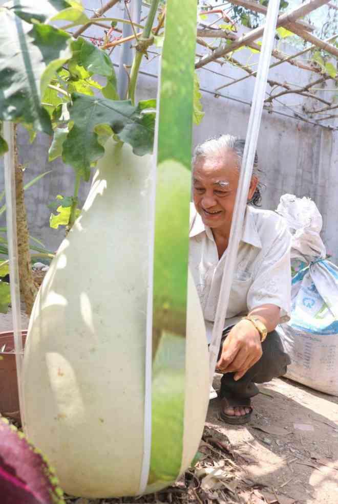 Lạ lùng những trái bầu siêu to, khổng lồ nặng từ 15-30 kg - 7