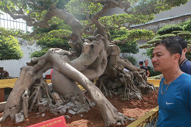 Với việc sở hữu hàng trăm cây cảnh quý hiếm, giá trị lên đến hàng chục triệu đô la Mỹ, vườn cây của ông Toàn được các tổ chức trong nước công nhận là vườn cây Di sản đầu tiên ở Việt Nam.