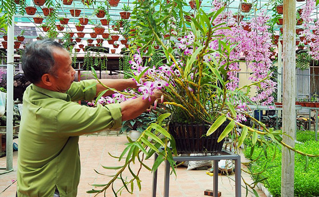 Đó là vườn phong lan của ông Nguyễn Văn Bình ở phường Đông Ngạc (Bắc Từ Liêm - Hà Nội).