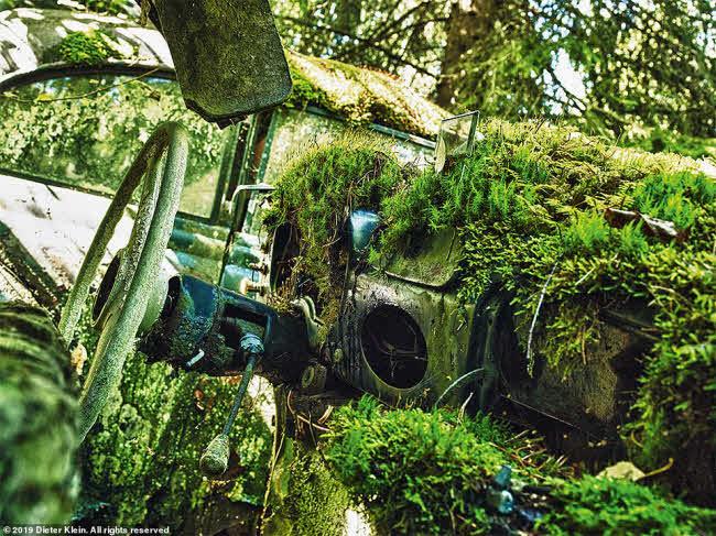 Vẻ đẹp ma mị của những chiếc ô tô bị thiên nhiên xâm lấn - 2