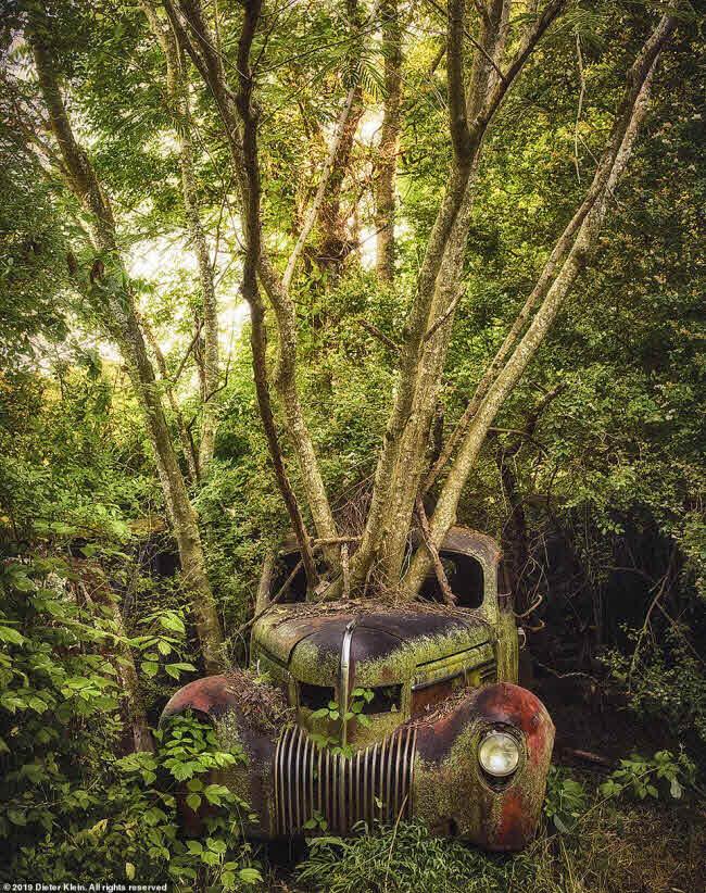 Vẻ đẹp ma mị của những chiếc ô tô bị thiên nhiên xâm lấn - 8