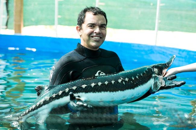 Sau khi cá tầm beluga được sinh ra phải trải qua quá trình 10 năm mới có thể thu hoạch được trứng để chế biến thành trứng cá muối. Điều đặc biệt là sau 5 năm mới xác định được giới tính của con cá tầm beluga.