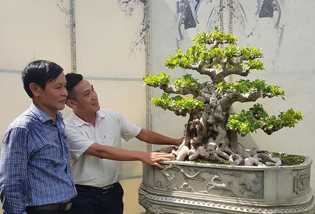 Theo chủ nhân của tác phẩm, trước kia cây thuộc một gia đình có truyền thống chơi cây cảnh ở Bình Định. Sau nhiều năm theo đuổi, cách đây 2 năm, ông Tuyền đã mua được. Cây phôi bán đầu có tuổi đời hơn 100 năm.