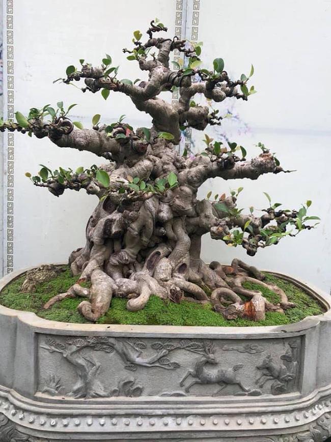 Tác phẩm đã hội tụ được sự hài hòa của cả hai trường phái cây cảnh nghệ thuật. Đó là cây cảnh truyền thống (cây thế Việt Nam) và cây cảnh nghệ thuật đương đại (bonsai quốc tế).
