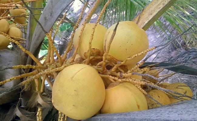 Độc đáo giống quả 2 màu ở Việt Nam cho nước ngọt lừ 10--copy--1597212033-582-width650height400