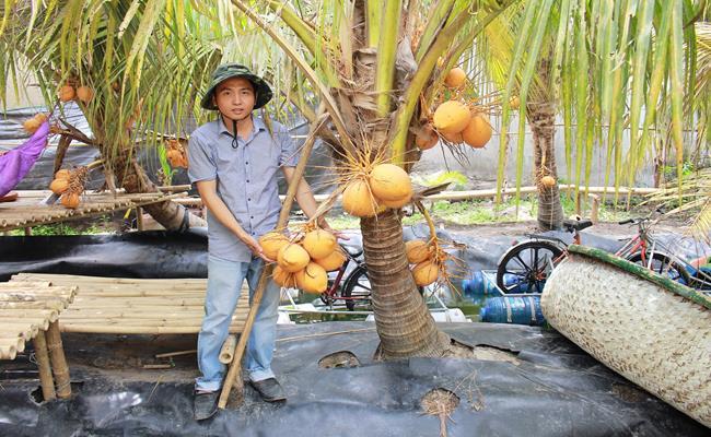 Độc đáo giống quả 2 màu ở Việt Nam cho nước ngọt lừ 13--copy--1597212033-303-width650height400