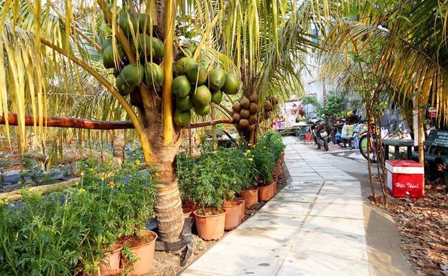 Độc đáo giống quả 2 màu ở Việt Nam cho nước ngọt lừ 15--copy--1597212033-544-width650height400