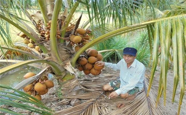 Độc đáo giống quả 2 màu ở Việt Nam cho nước ngọt lừ 8--copy--1597212033-475-width650height400
