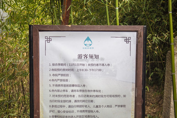 Ngôi chùa hàng nghìn năm tuổi bỗng dưng nổi tiếng chỉ vì loài cây này - 4