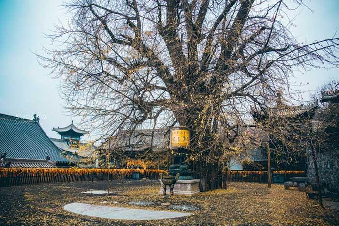 Ngôi chùa hàng nghìn năm tuổi bỗng dưng nổi tiếng chỉ vì loài cây này - 3