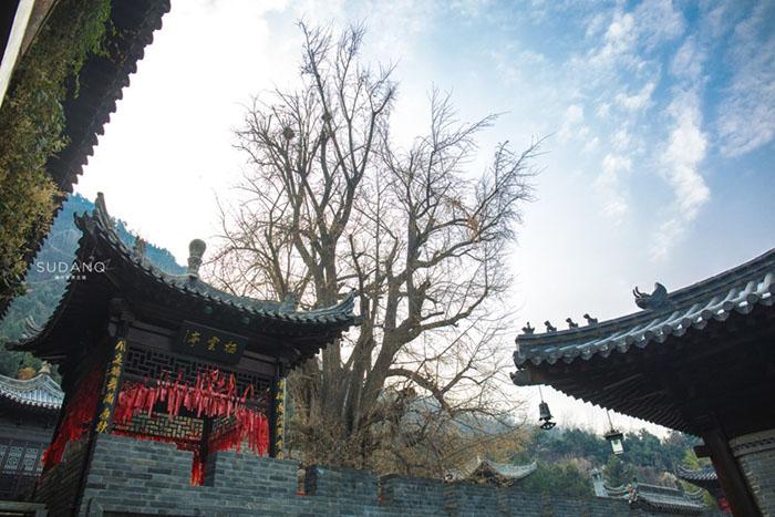 Ngôi chùa hàng nghìn năm tuổi bỗng dưng nổi tiếng chỉ vì loài cây này - 10