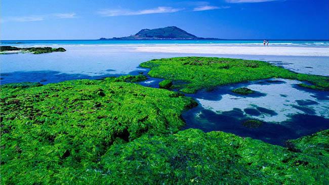 Bãi biển Hyeupjae: Được coi là bãi biển đẹp nhất Hàn Quốc.