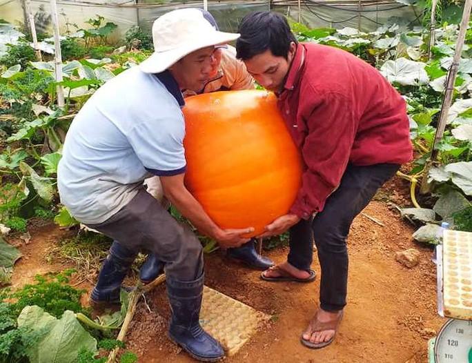 Ngắm bí ngô khổng lồ ở Đà Lạt sẵn sàng cho lễ Halloween - 6