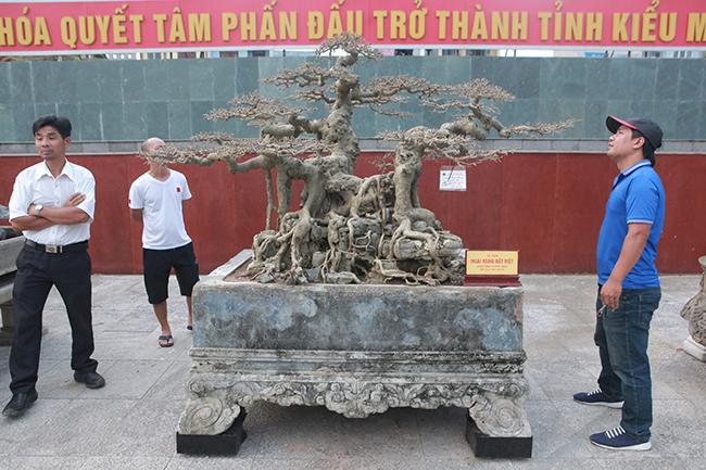 """Tác phẩm sanh cổ """"Ngai vàng đất Việt"""" thu hút khá đông du khách đến chiêm ngưỡng tại triển lãm Festival cây cảnh tỉnh Thanh Hóa."""