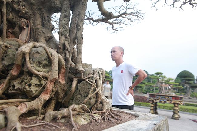 Kể về nguồn gốc, anh Nam chia sẻ, anh mua cây cách đây 15 năm với giá 10 triệu đồng. Thời điểm mua, dáng cây (cốt) đã như vậy. Tuổi đời của cây phải trăm năm tuổi.
