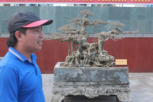 """Anh Lê Đức Nam (Hưng Yên), chủ nhân của tác phẩm cho biết, đây là lần đầu tiên mang """"báu vật"""" trong vườn đi triển lãm với mong muốn người dân, giới chơi cây ngắm chứ không có ý định bán."""