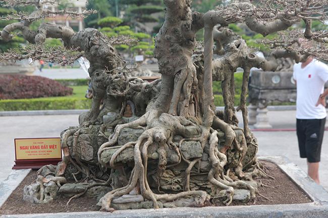 Nhìn tứ diện cây sanh cổ rất có chiềusâu, vừa cổ điển, vừa hiện đại