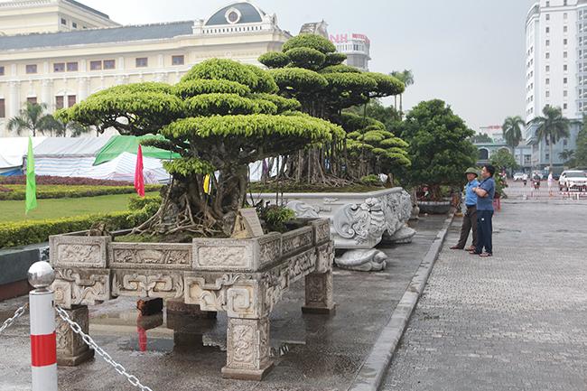 Ba cây sanh cổ đều có tuổi đời trêndưới 100 năm, mỗi cây có kích thước khác nhau nhưng đều đạt đến sự hoàn hảo về nghệ thuật.