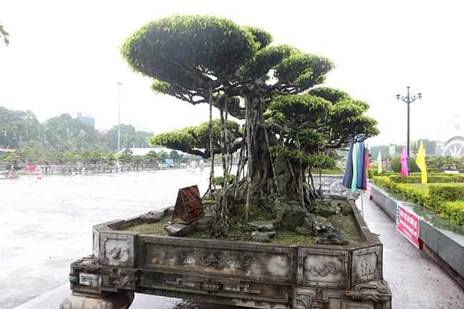 """""""Thời điểm mới mua về, cây chưa có dáng thế hoàn hảo. Để cây đẹp và có giá trị như bây giờ, tôi phải thuê những nghệ nhân làm cây giỏi nhất ở Nam Định sáng tác, họ làm bằng tâm huyết chứ không vì kinh tế nên tác phẩm hoàn hảo từ gốc lên ngọn"""", anh Trường cho biết."""