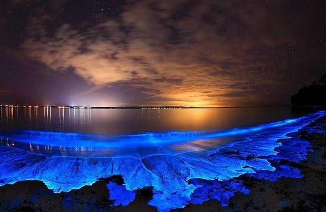 Tảo phát quang khiến bãi biển rực sáng vào ban đêm - 3