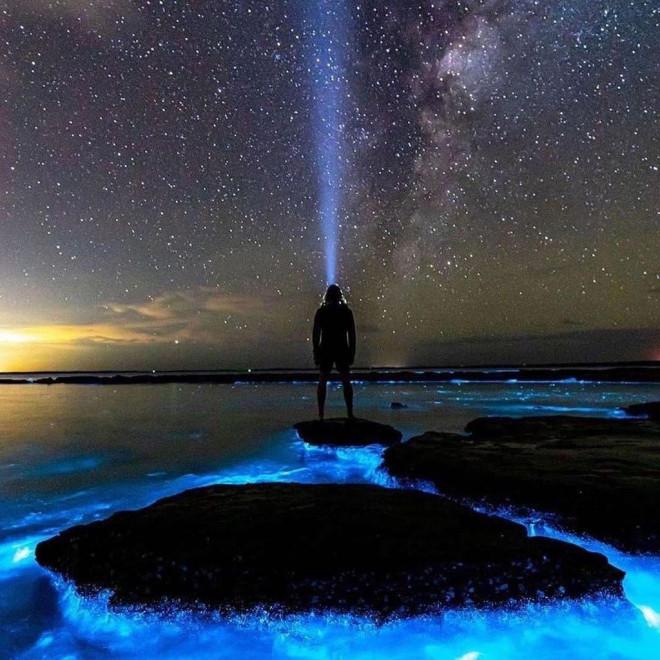 Tảo phát quang khiến bãi biển rực sáng vào ban đêm - 4