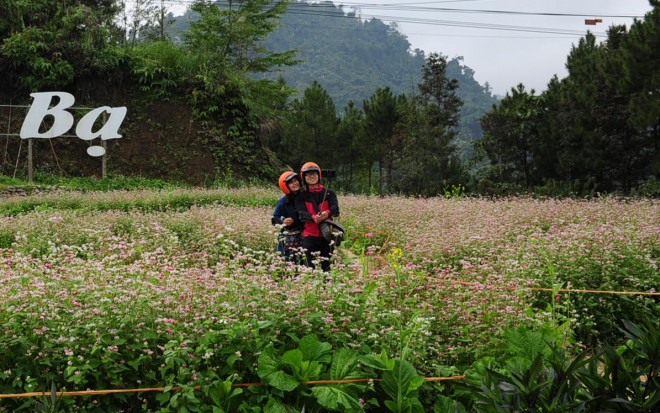 Hoa tam giác mạch Hà Giang nở rộ khiến du khách mê mải quên lối về - 5