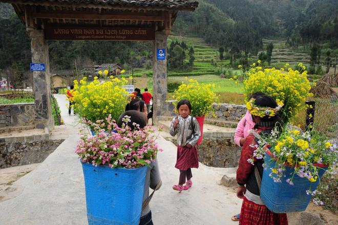 Hoa tam giác mạch Hà Giang nở rộ khiến du khách mê mải quên lối về - 10