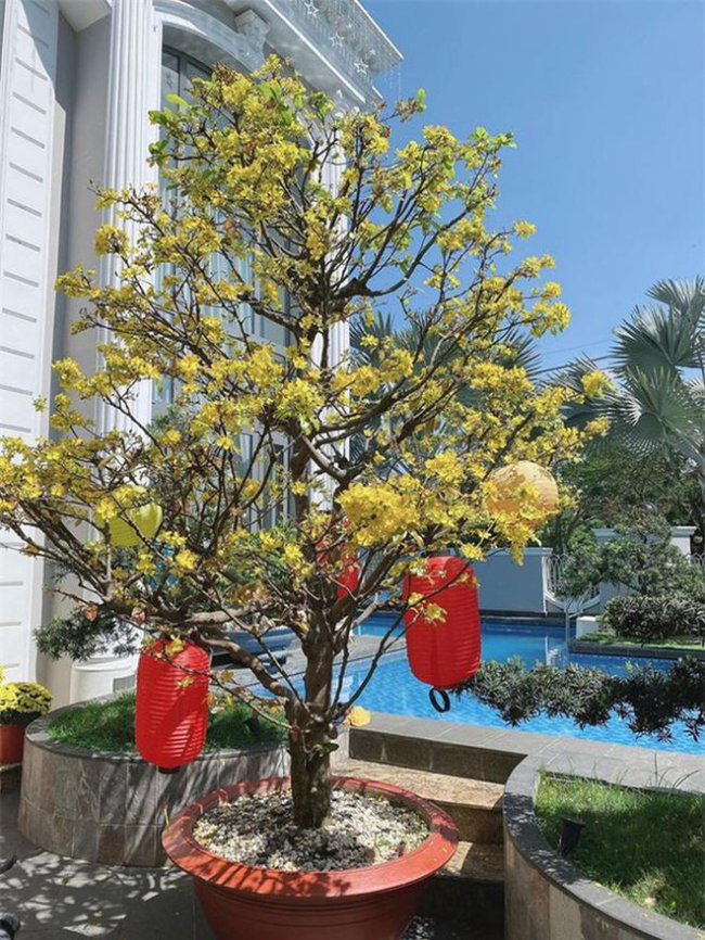 Khuôn viên căn biệt thự của vợ chồng Bảo Thy còn có hồ bơi riêng khá rộng.