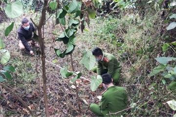 Thủ đoạn của chủ nhà hàng ở Nghệ An cầm đầu băng trộm trâu bò liên tỉnh