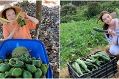 Về quê tránh dịch, Lý Nhã Kỳ đẩy xe rùa đi thu hoạch hoa quả trong nông trại 50ha