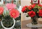 """5 loại cây, hoa """"phá tan"""" phong thủy, gia chủ không nên đặt trong nhà"""