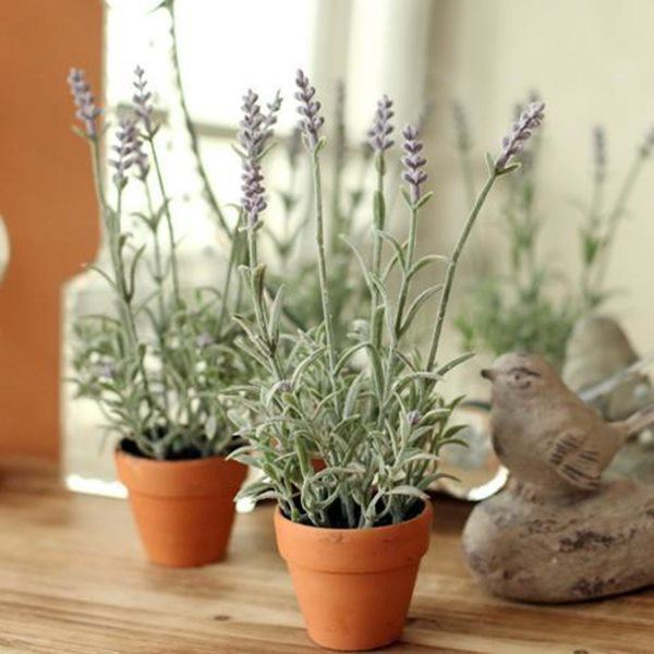 8 loai hoa thom nhu nuoc hoa, trong ban cong dua huong nuc ca nha - 3