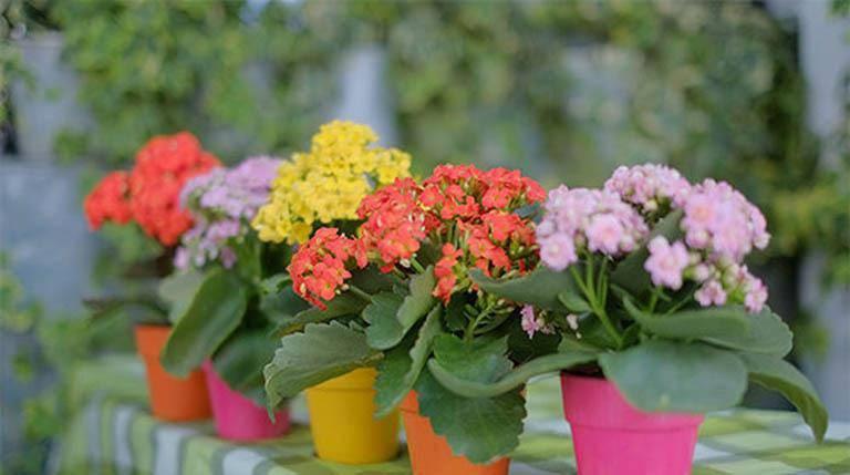 4 loại cây trồng trong nhà có thể giúp trừ tà khí, xua đuổi vận đen, tài lộc kéo đến - 7