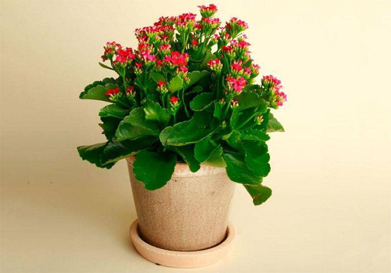 4 loại cây trồng trong nhà có thể giúp trừ tà khí, xua đuổi vận đen, tài lộc kéo đến - 8