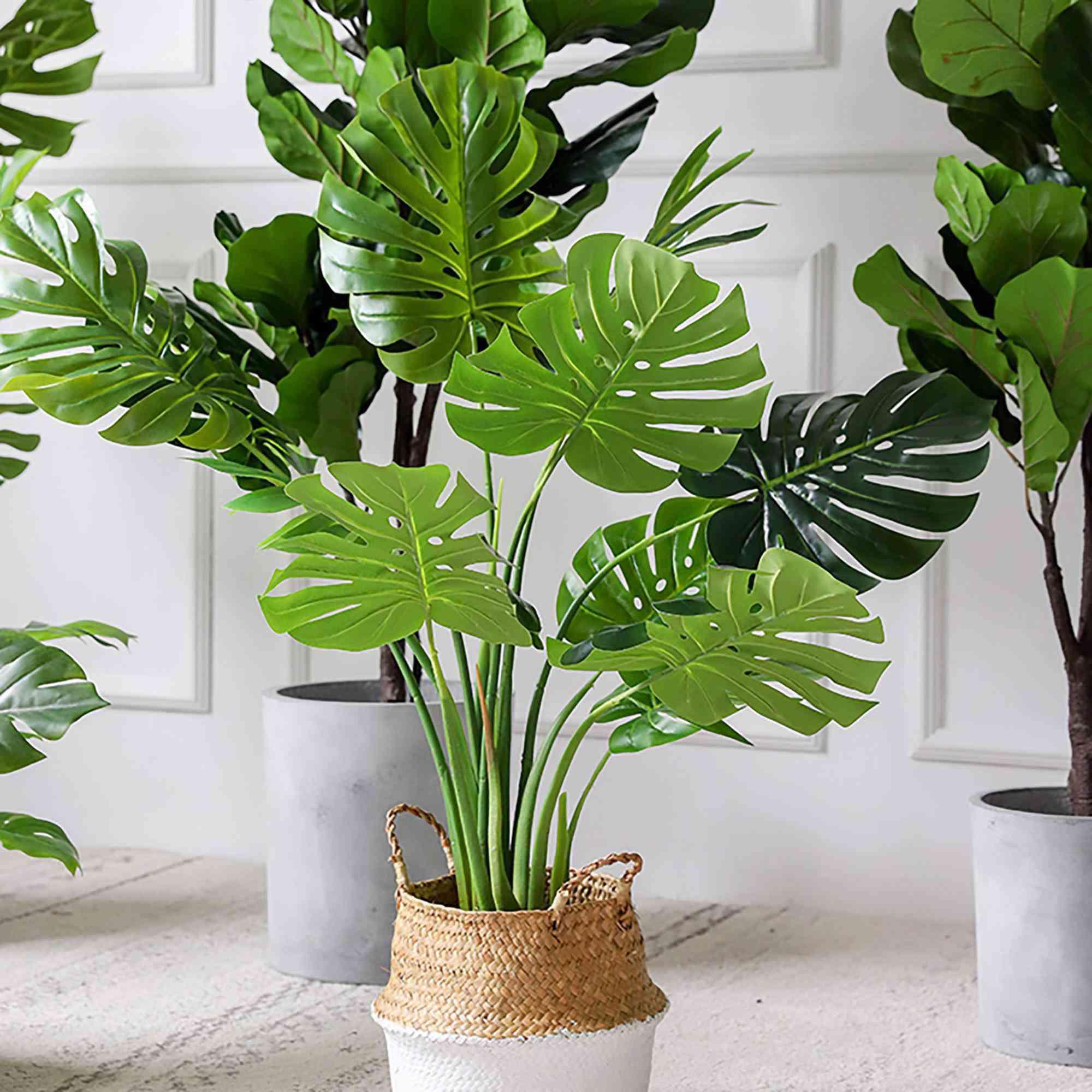 7 loại cây phong thủy vừa thanh lọc không khí vừa mang tài lộc, phú quý cho gia chủ - 4