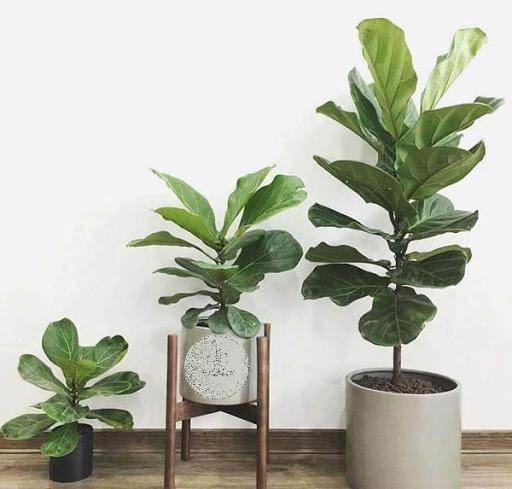 7 loại cây phong thủy vừa thanh lọc không khí vừa mang tài lộc, phú quý cho gia chủ - 7