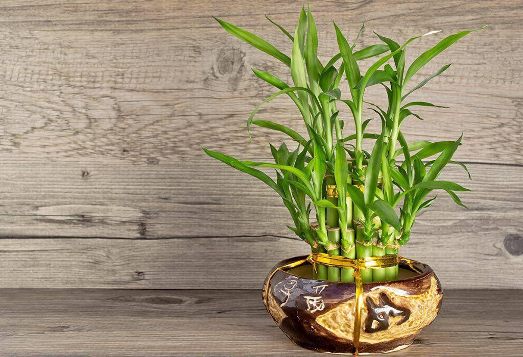 7 loại cây phong thủy vừa thanh lọc không khí vừa mang tài lộc, phú quý cho gia chủ - 8