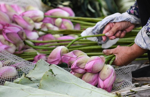 Other seller told that she usually buys 50 to 100 bouquets of lotus flowers at the Quang Ba wholesale market and then separate them to bundles of ten flowers for retail sales, costing VND50,000 (US$2.1) to VND60,000 (US$2.6) each.