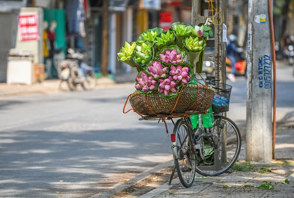 Unlike other kinds of flowers which can be sold through the day, lotus flower peddlers just show up at Mai Xuan Thuong, Thuy Khue and Ly Nam De streets after 7.30 am because the lotus flowers are usually picked at dawn.